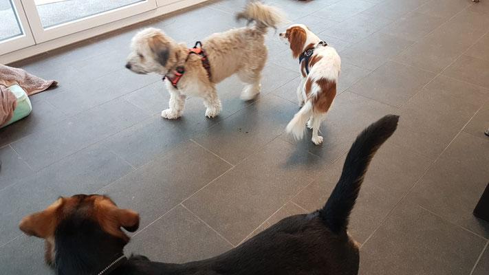 Ninja, Charlie und Pongo ...