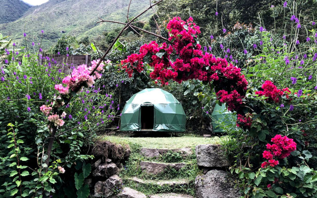 Jungle Domes.