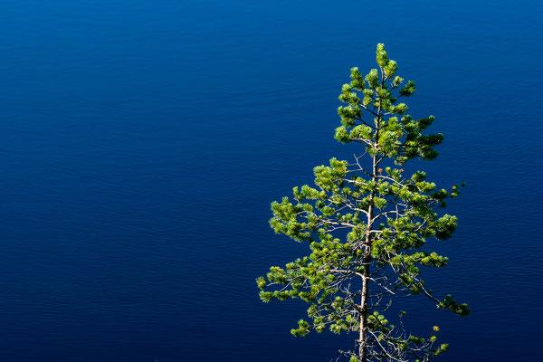 Tree and lake at Lahemaa park