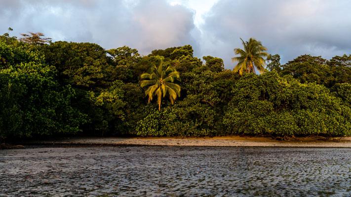 Palm tree during sunrise at Cape Tribulation beach, Queensland, Australia