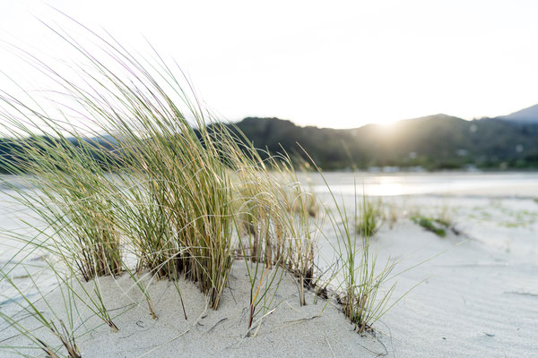 Grass on the beach during sunset at Abel Tasman National Park, New Zealand