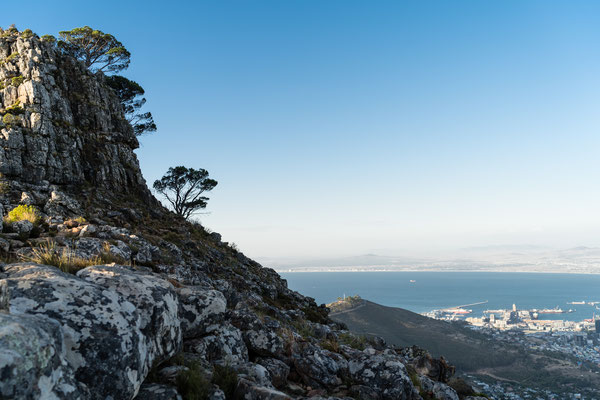 Viewing Capetown harbour and Signal Hill from Lion's Head