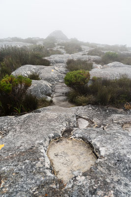 Hiking towards Maclear's Beacon on Table Mountain