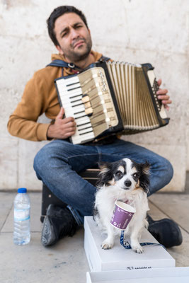 Street musician and his dog in Lisbon
