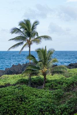 Palms at Waiʻānapanapa State Park, Maui, Hawai'i Island, USA