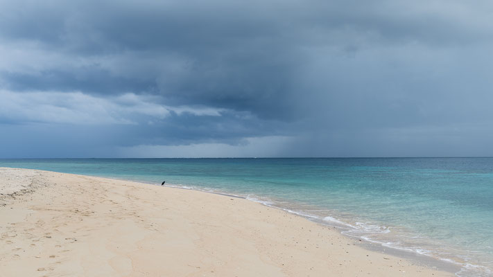 Cormorant on Naukacuvu Island, Yasawa Islands, Fiji, before a thunder storm