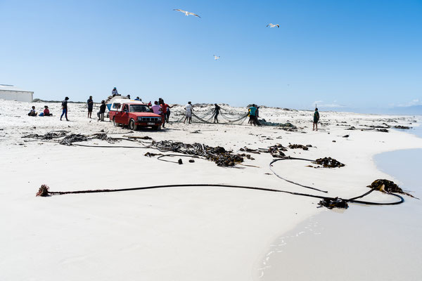 Fishermen bringing in the daily catch of the False Bay in Muizenberg, South Africa