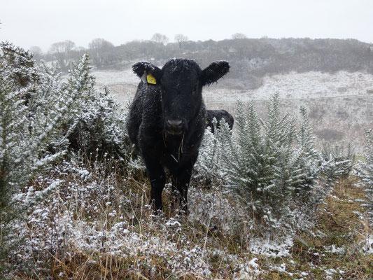 La paz de las bestias de invierno