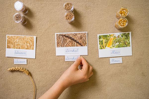 Schreib- und Leseübung mit Getreidesorten