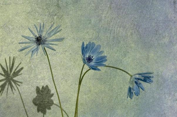 Blue dancers in the wind
