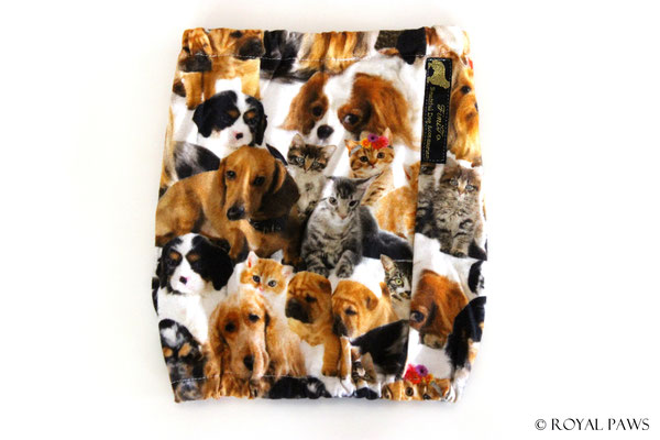 Dog & Cat (with Cavalier King Charles Spaniel)