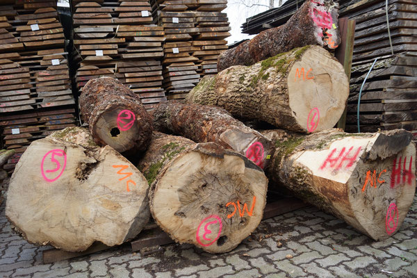 Elm burl round logs