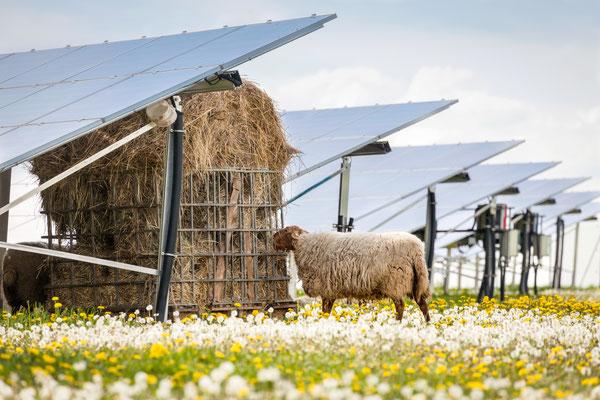 champs ferme solaire
