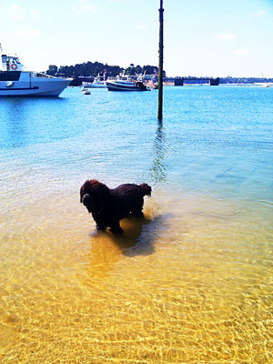 Urlaub mit Hund Bretagne