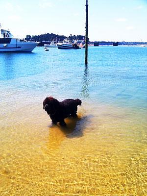 Saint Malo Ferien mit Hund