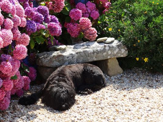 Ferienhaus Maison Dodo Bretagne Garten für Hunde
