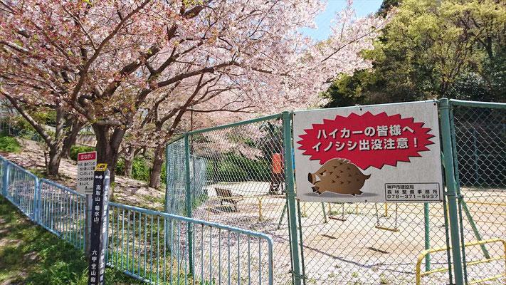 縦走路沿いの公園では、まだまだ桜が健在