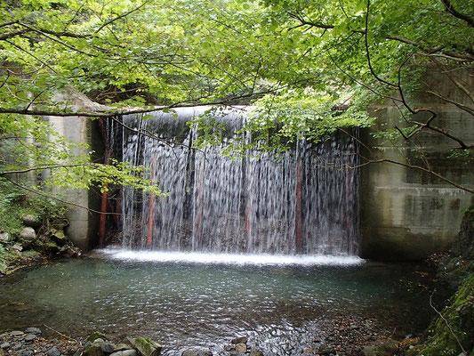この堰堤が見えたらすぐに林道に出られます