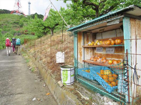 柑橘類の無人販売所。荷物が重くなるので通りです。