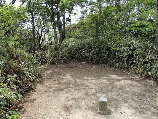 龍王山 山頂三角点周辺の様子