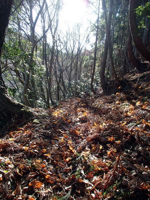 09ふわふわの落ち葉の絨毯です
