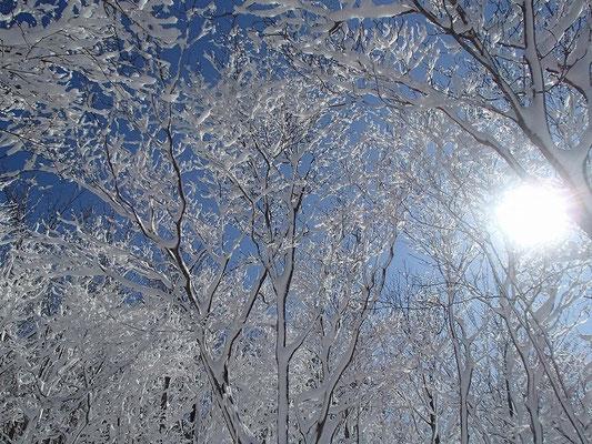 樹木の一方向に雪が付着しているので