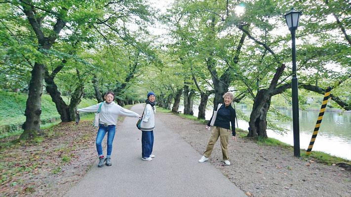 GWには、満開の桜のトンネルとなります。