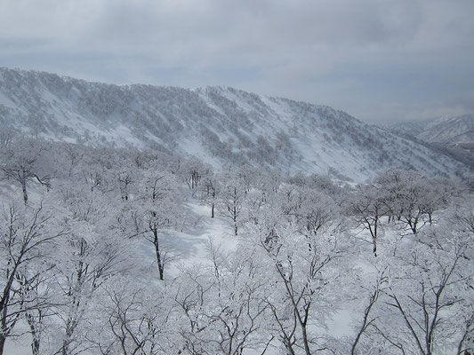 縫ケ原山からになだらかの稜線とモッカ平へのいい斜面。