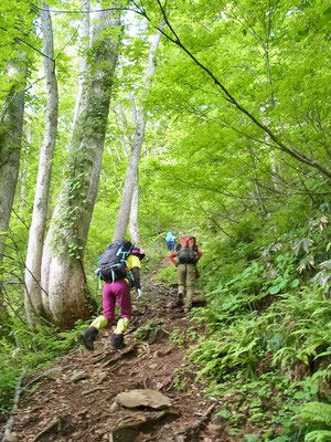 急登ですが、下部は樹林帯で日蔭です
