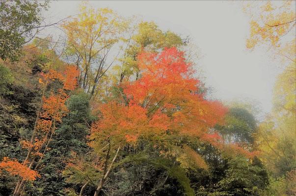 ③紅葉真っ盛り