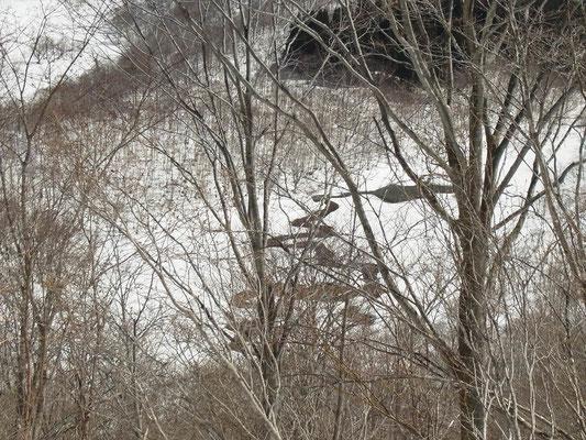 雪が溶け始めた湿地帯。川の蛇行がいいね