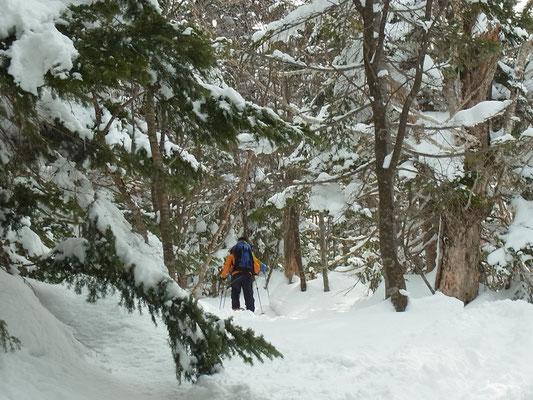 夫婦松から上部はこんな密な樹林帯