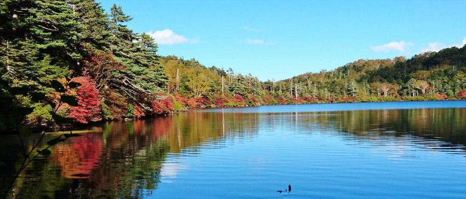 これから紅葉のピークを迎える白駒の池