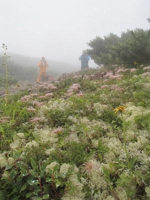 霧にかすむ、お花畑