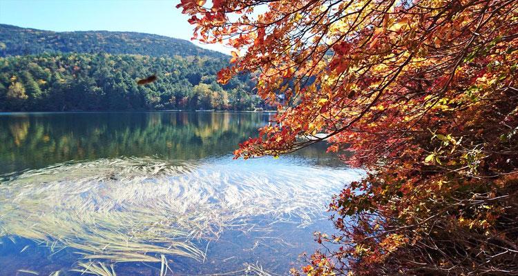 白駒の池に戻り、湖畔にて撮影