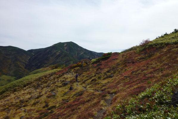 赤く染まったチングルマの葉っぱの絨毯。