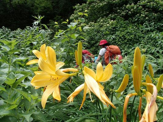 ニッコウキスゲが咲く山道を進みます