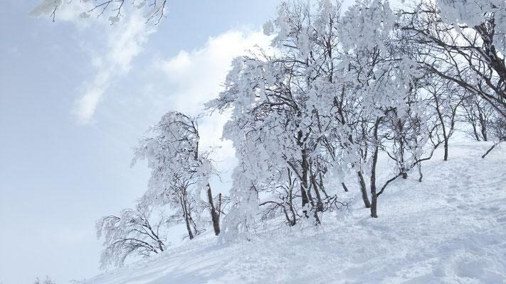 木々の枝は樹氷を纏って白く映える