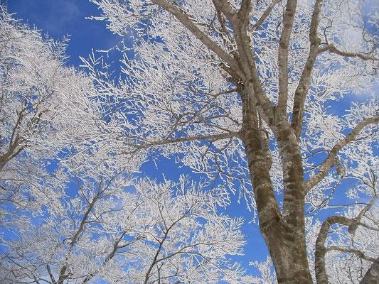 青空になって木々は芸術作品に
