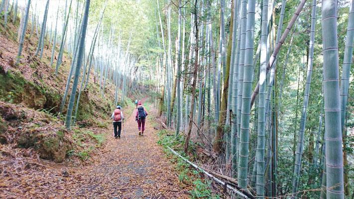 まずは、きれいな竹林を筍を見ながら進む