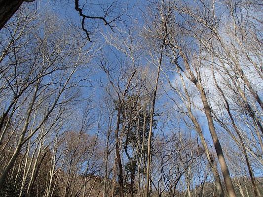 その道は歩きやすい木立の中を通り、参道につながっていました