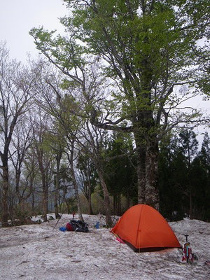 新緑のブナの下にはったテント。朱と緑のコントラストがお気に入り。(笑)