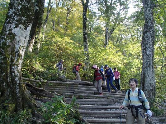 ブナ林の中の階段道を降りてきました