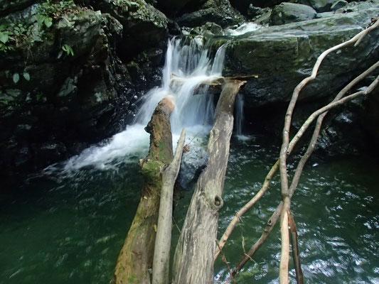 ナメ滝2mの天然の木の橋