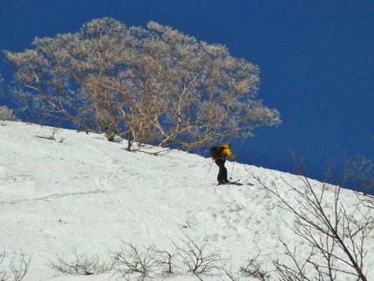ダケカンバの樹氷と青空と