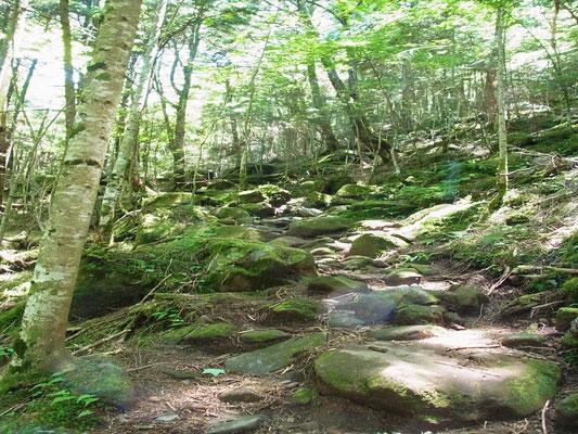 八ケ岳らしい苔蒸した登山道を登る