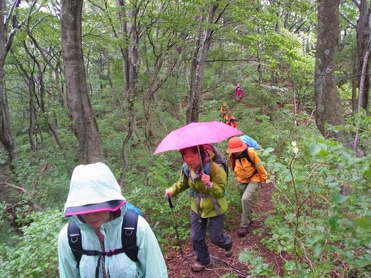 小雨が降っていますが、歩きやすい道です。