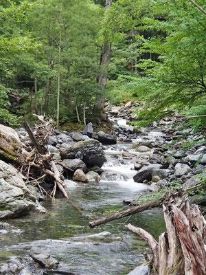 おおきな沢の野呂川を横目に林道を下山