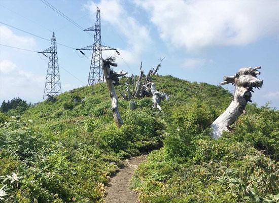 下山時に、竜のオブジェ(枯れ木)