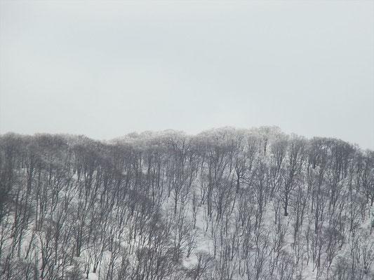 横山岳山頂部の木々が白くなってる。雪か?